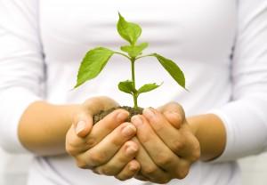 Plant-growing-shutterstock_57041488